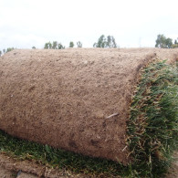 turf_grass_producers_01