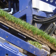 turf_grass_producers_04